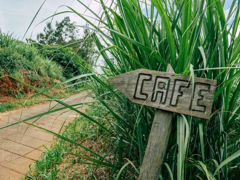rencontre au domaine des caféiers à saint-paul, l'unique exploitation de café bourbon pointu bio de la réunion 974