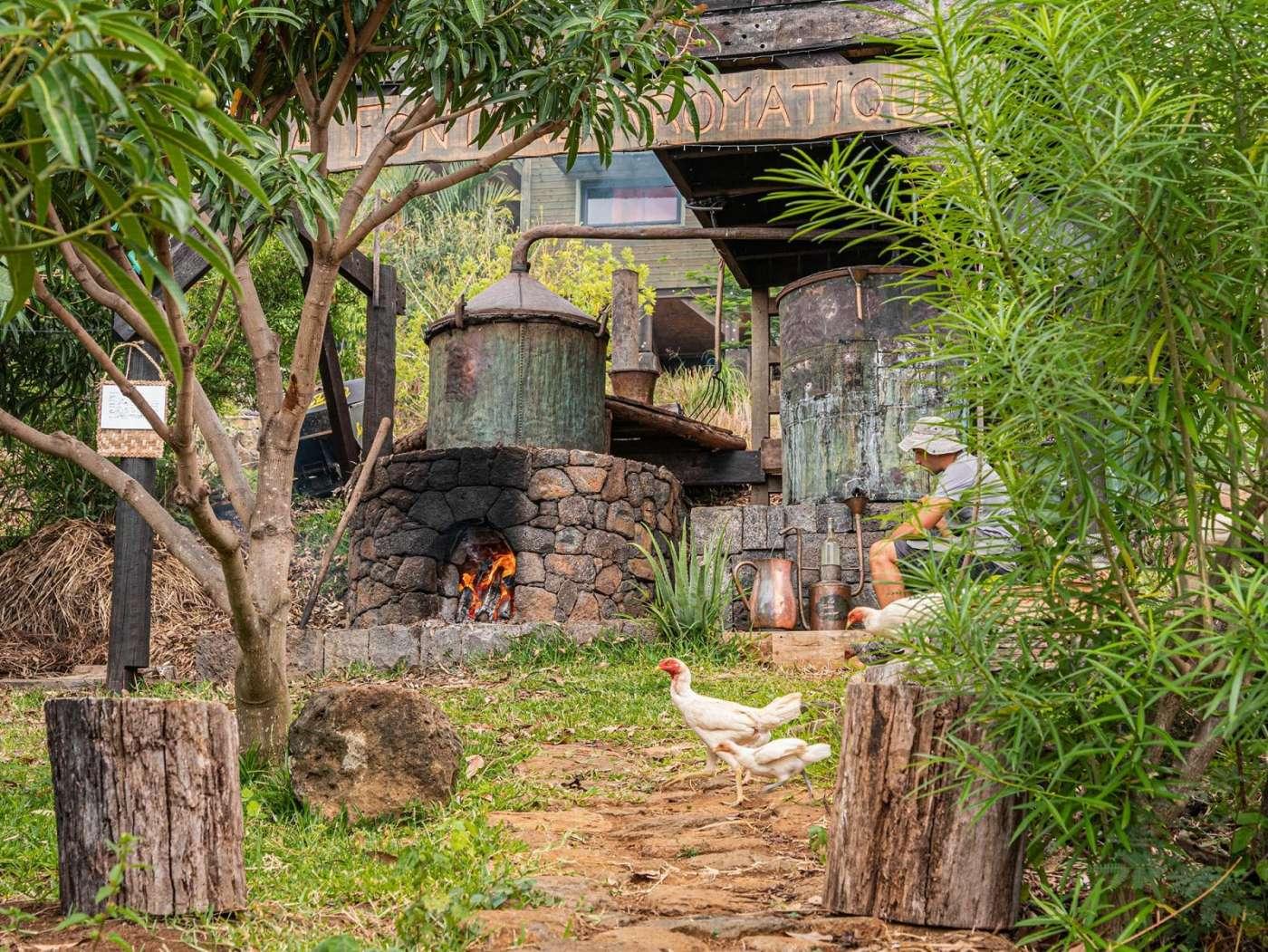 La fontaine aromatique : fabrication artisanale d'huiles essentielles à saint-leu 974