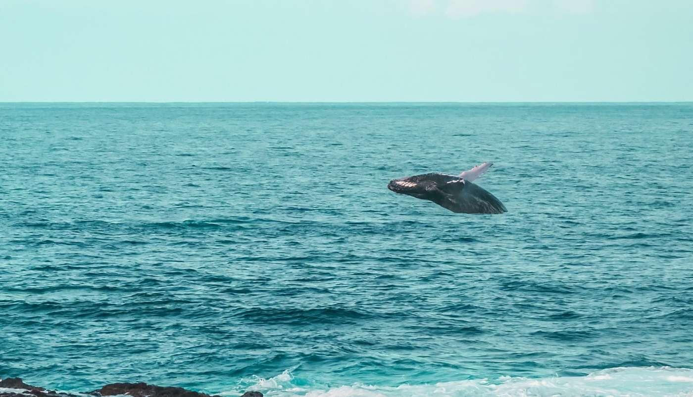 Où observer les baleines à la réunion - les meilleurs spots de l'ouest 974