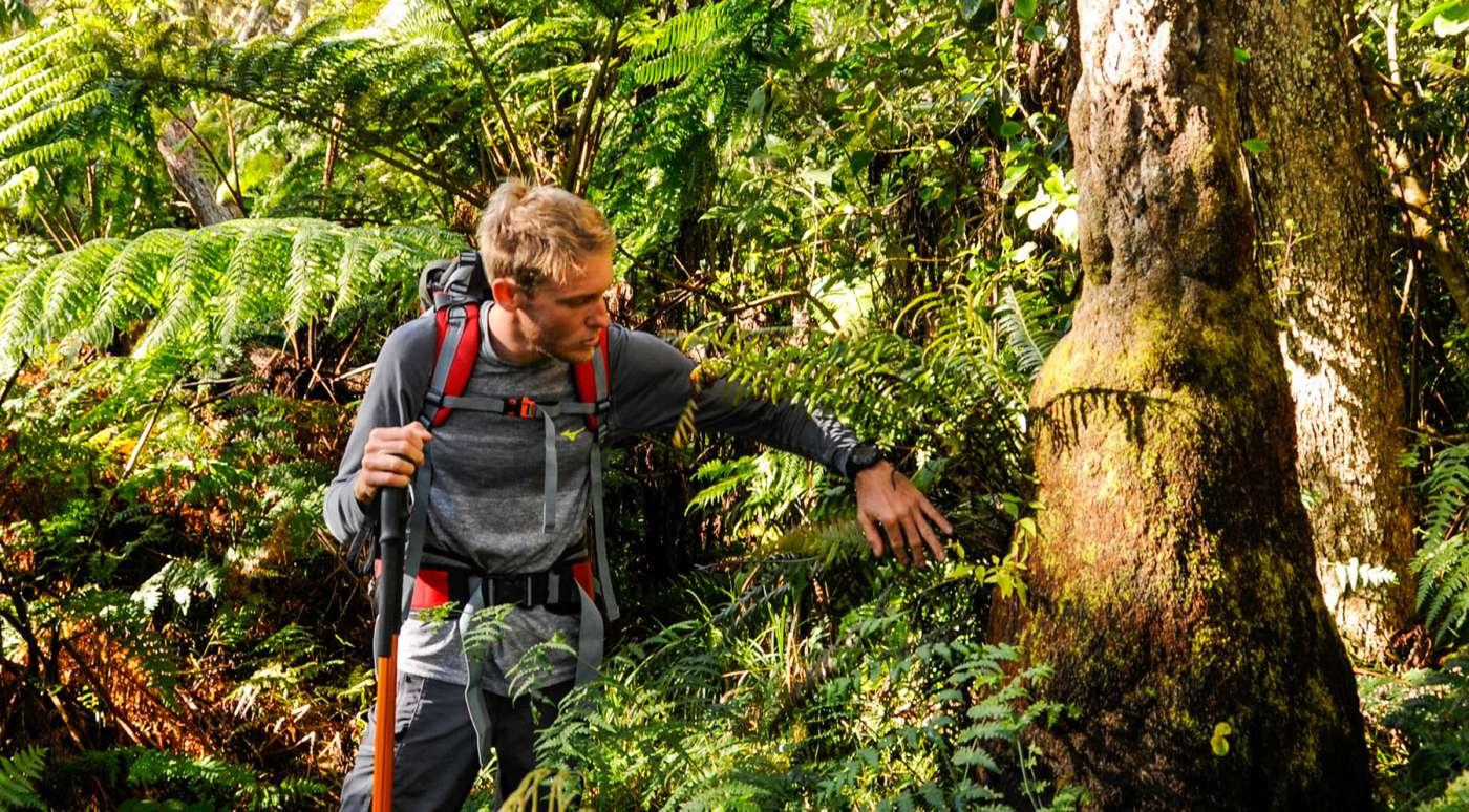 Alexis vincent d'ayapana : suivez le guide 974