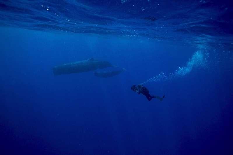 rené heuzey : la mer en image - l'invité d'honneur du festival de l'image sous-marine de la réunion   974