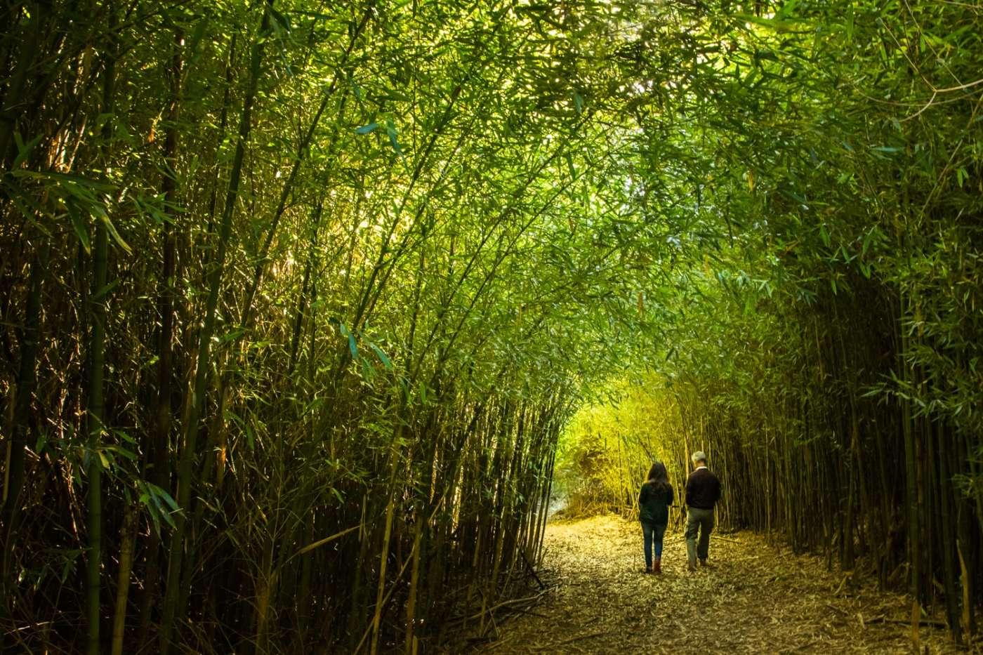 La bambusaie du guillaume rouvre ses portes 974