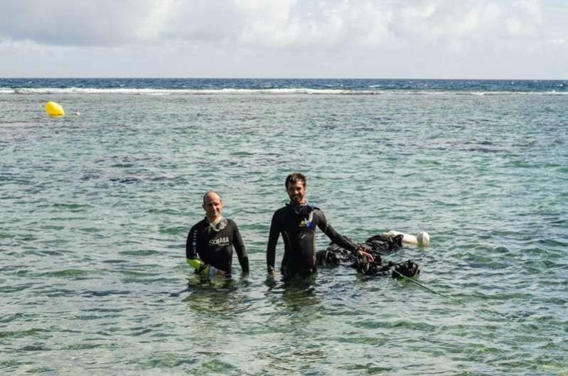 festival de l'image sous-marine de la réunion : première immersion réussie 974