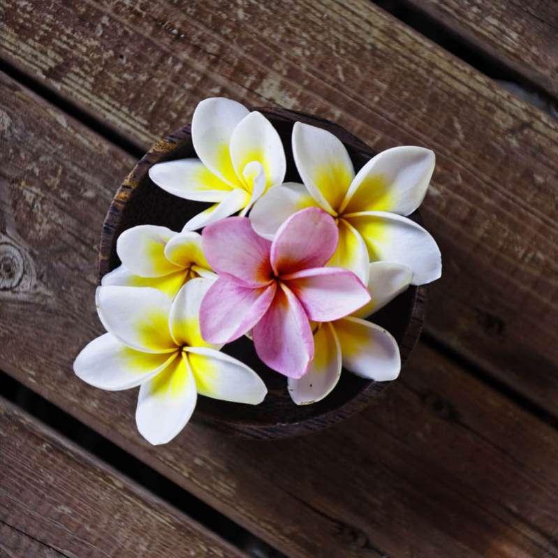 hôtel boucan canot - fleur de vie : le bien-être autrement 974