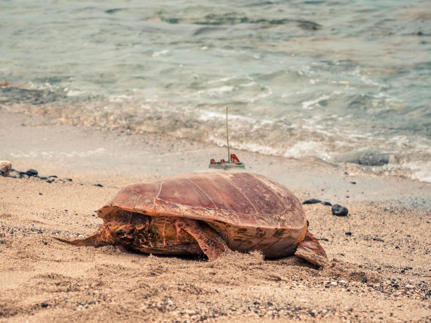 Les coulisses de Kelonia : une journée dans la peau d'un soigneur de tortue