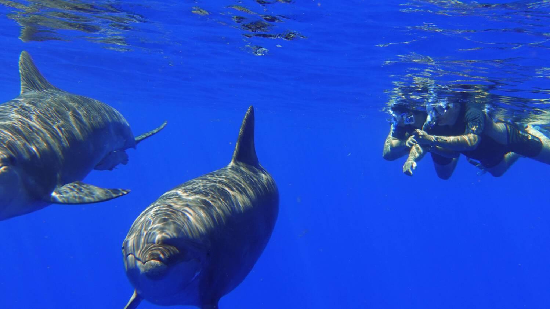 nager avec les dauphins à l'ile de La Réunion