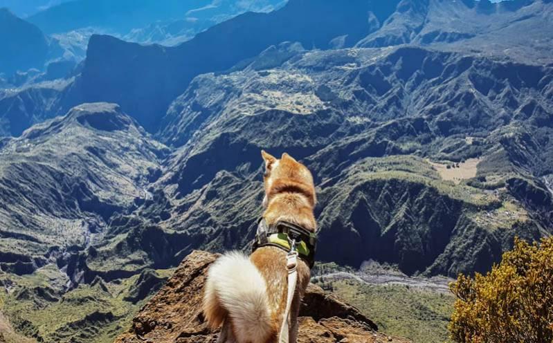 Randonner dans Mafate avec son chien : nos 5 conseils