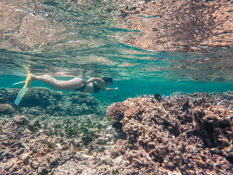 snorkelling à l'ile de la réunion