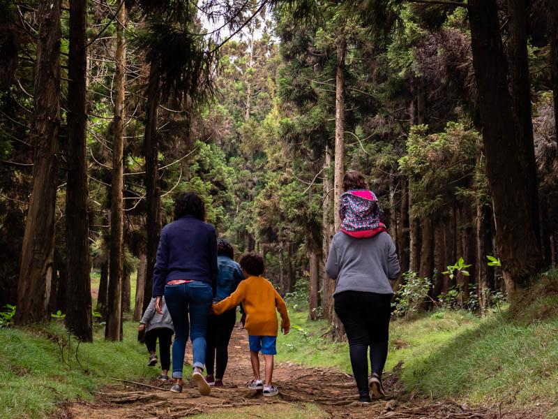 promenade dans la forêt de Trois-Bassins à l'Ile de La Réunion