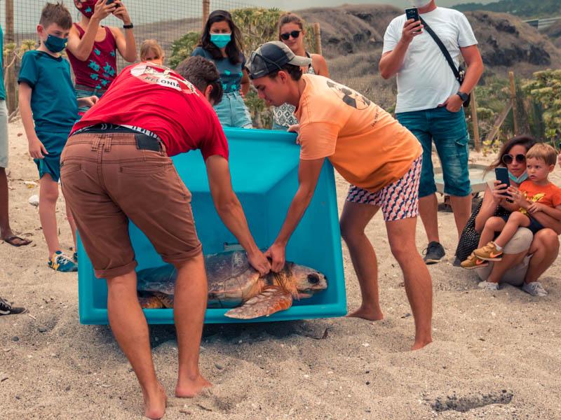 relacher de tortue à Kélonia ile de la réunion