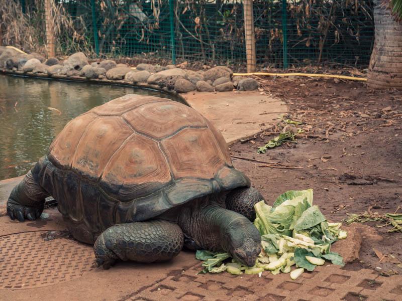harold doyen des tortues radiata de Kéolia