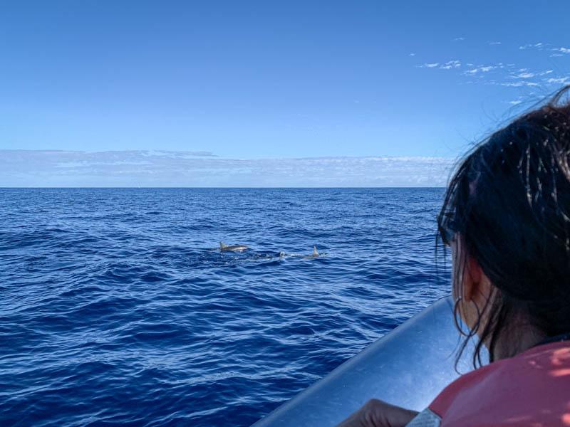 observation des dauphins depuis un bateau à l'ile de La Réunion 974