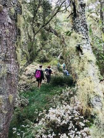 Randonneurs dans la forêt du Maido à l'ile de La Réunion 974