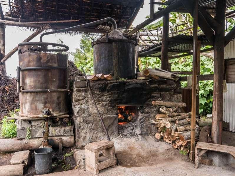 Les distilleries d'huiles essentielles du Maido à l'Ile de La Réunion 974
