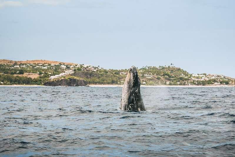 Observation des baleines et des dauphins à l'Ile de La Réunion 974