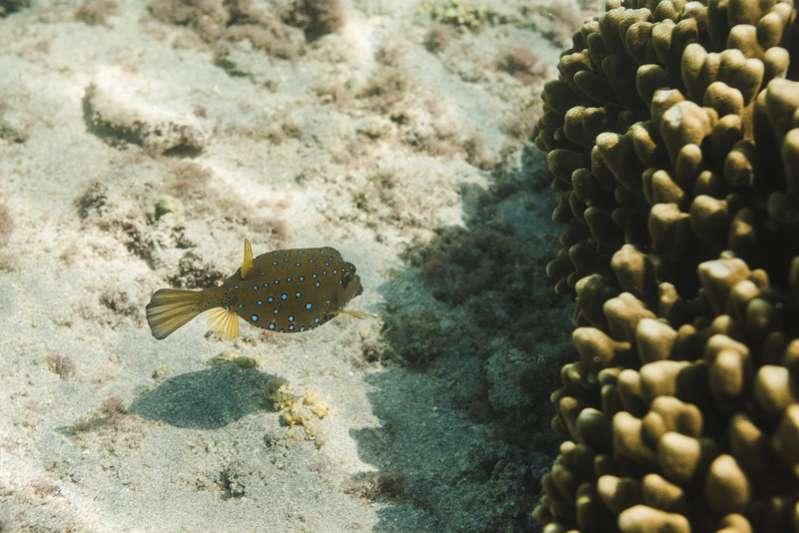Observation des poissons et des tortues à l'ile de La Réunion 974