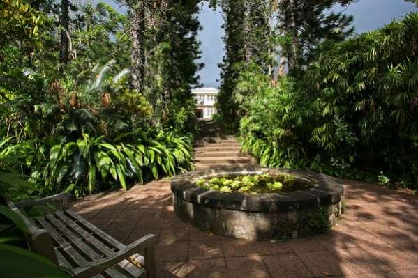 Mascarin Jardin Botanique de La Réunion Saint-Leu 974