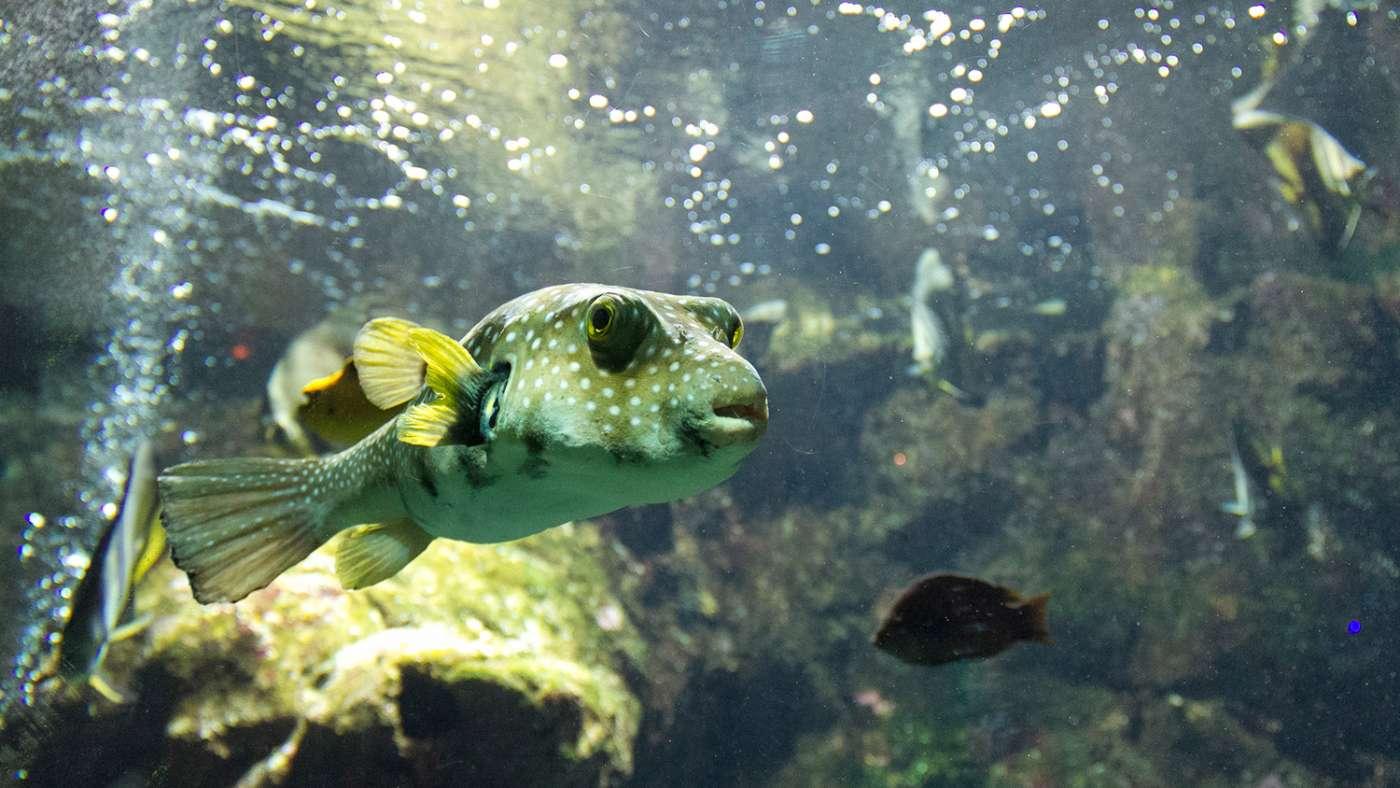 Aquarium de la Réunion Saint-Gilles-Les-Bains Saint-Gilles 974