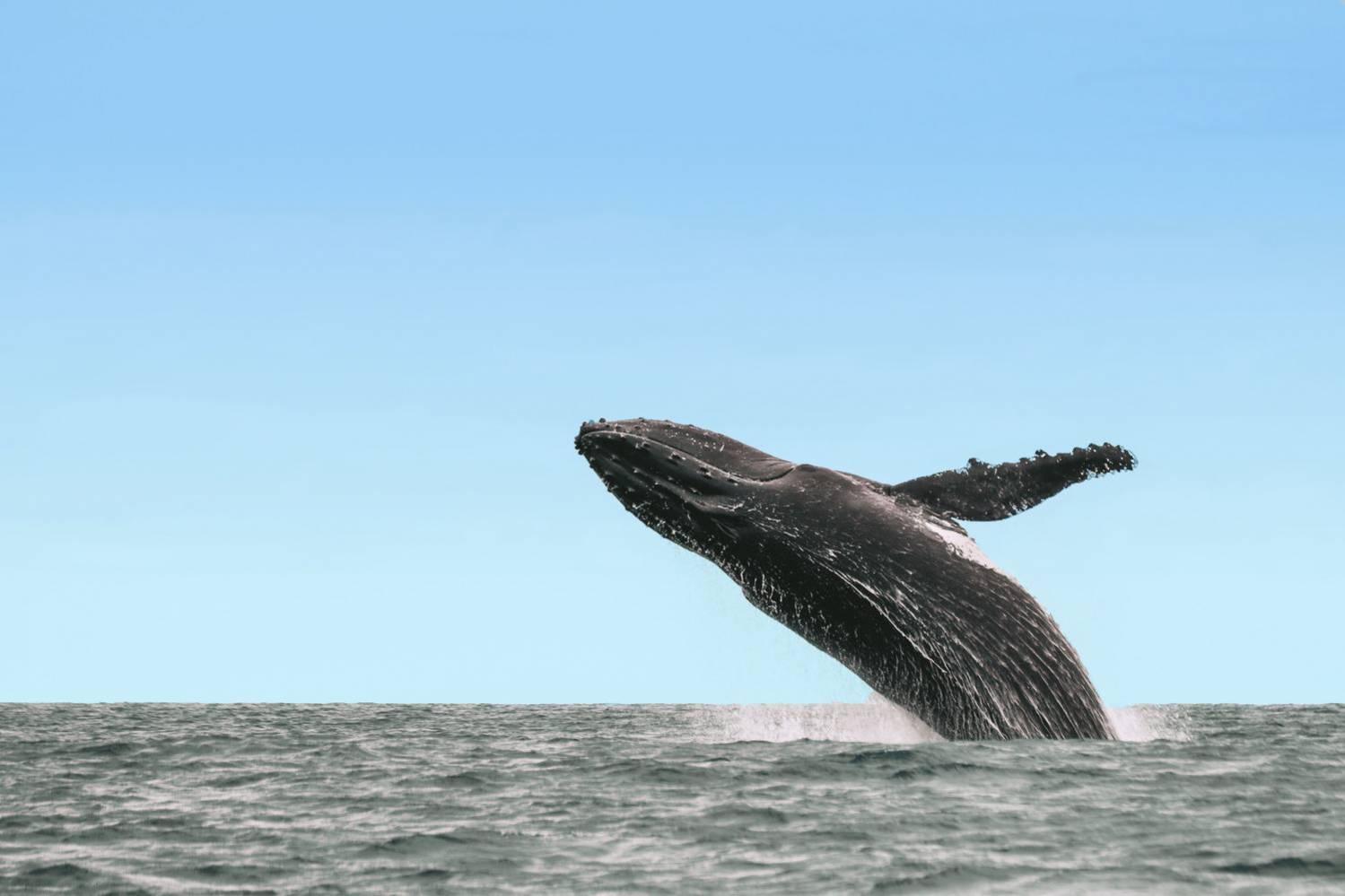 Observation des baleines et des dauphins 974