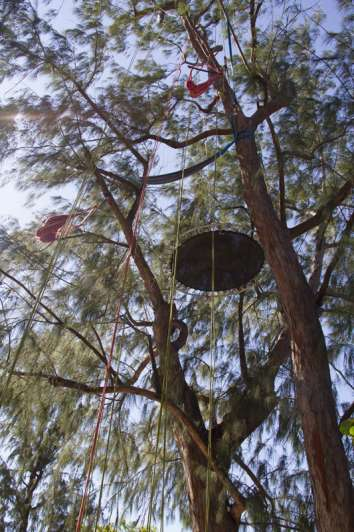 grimp'arbre 974