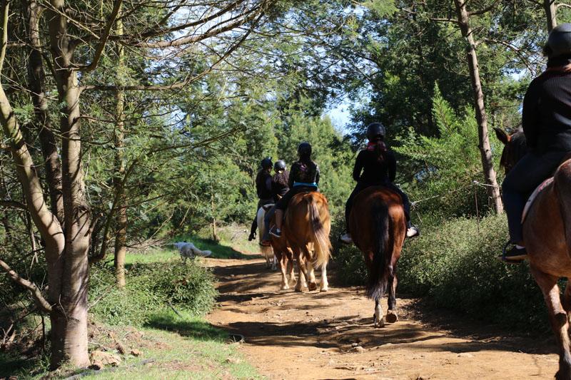 Balade à cheval dans la forêt du Maïdo à l'Ile de La Réunion 974