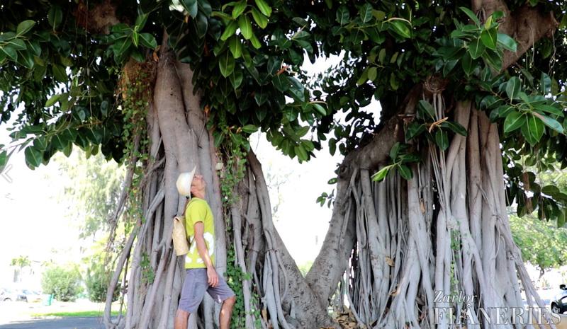 ZARLOR FLÂNERIES : RACONTE-MOI LE PORT À TRAVERS SES ARBRESLe Port, agenda, les randonnées et les visites guidées, Office de Tourisme, Ouest, La Réunion, Ile de La Réunion, 974