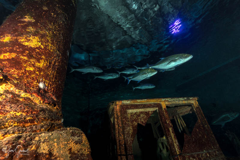 le grand bassin des prédateurs à l'Aquarium de La Réunion 974
